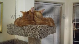 Twins top of cat tree